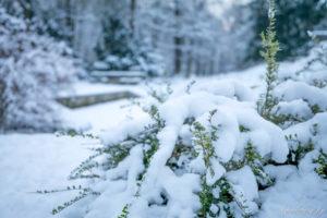 170117_Winter_00009