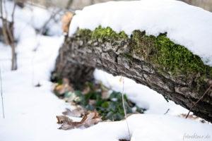 170128_Winter_00026