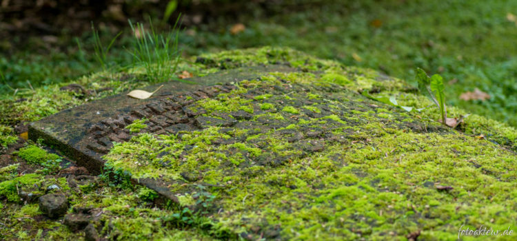 Fotowettbewerb Friedhofswegweiser Dresden – Unser Beitrag