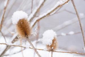 170115_Winter_00004