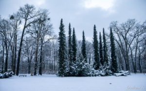 170117_Winter_00012
