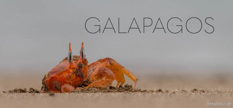 Galapagos – Teaser