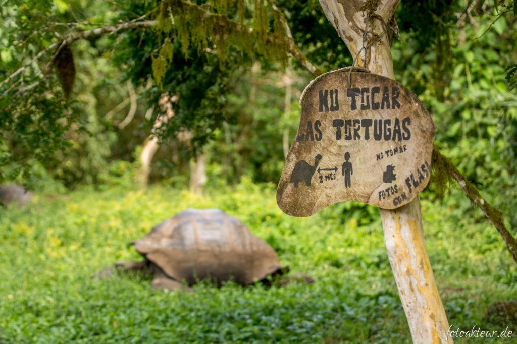 170531_Galapagos_Teil2_00019