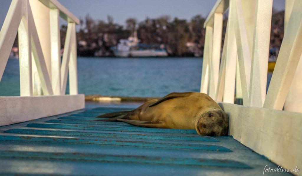 170531_Galapagos_Teil2_00057
