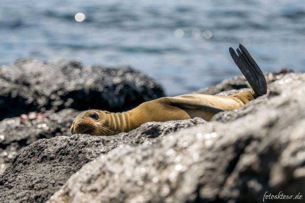 170601_Galapagos_Teil2_00016