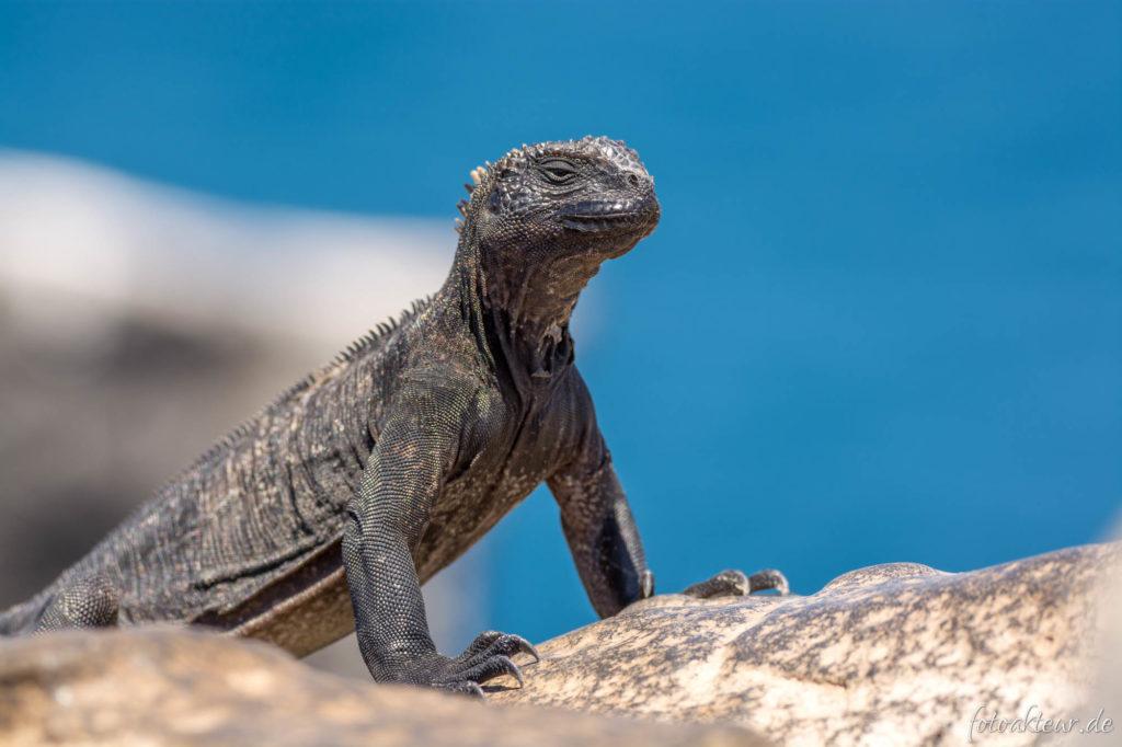 170601_Galapagos_Teil2_00051