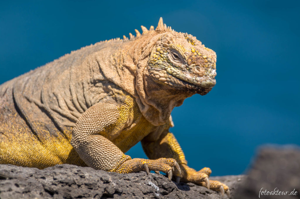 170601_Galapagos_Teil2_00056