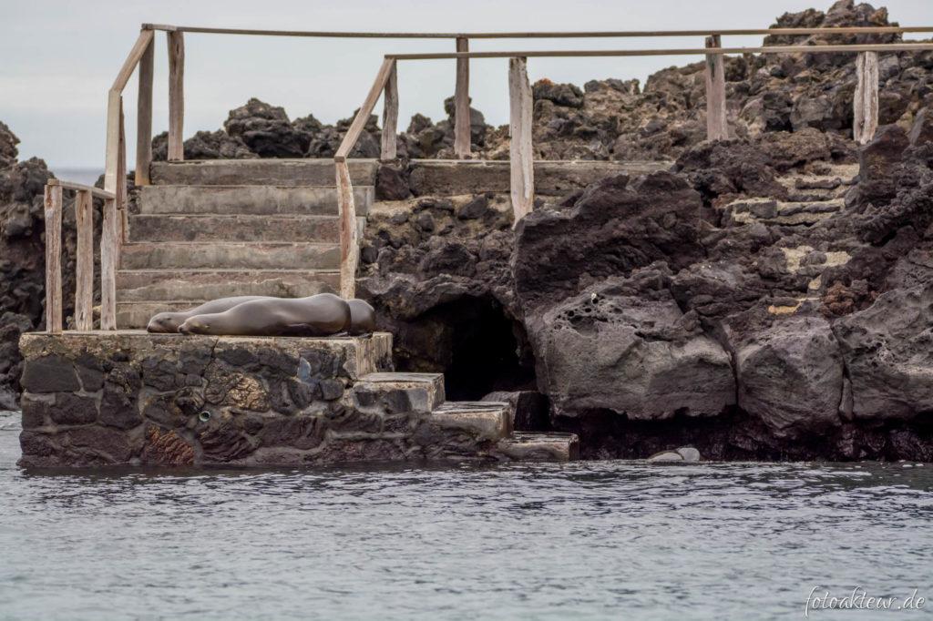 170602_Galapagos_Teil3.1_00003