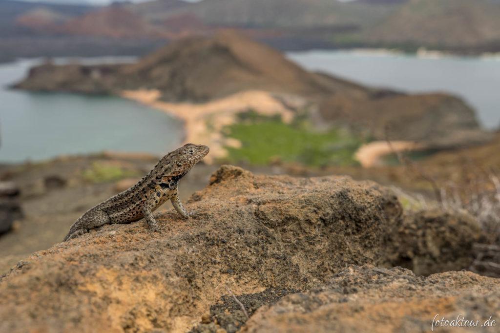 170602_Galapagos_Teil3.1_00015