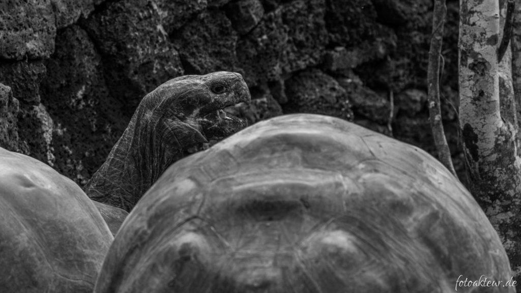 170603_Galapagos_Teil4_00006