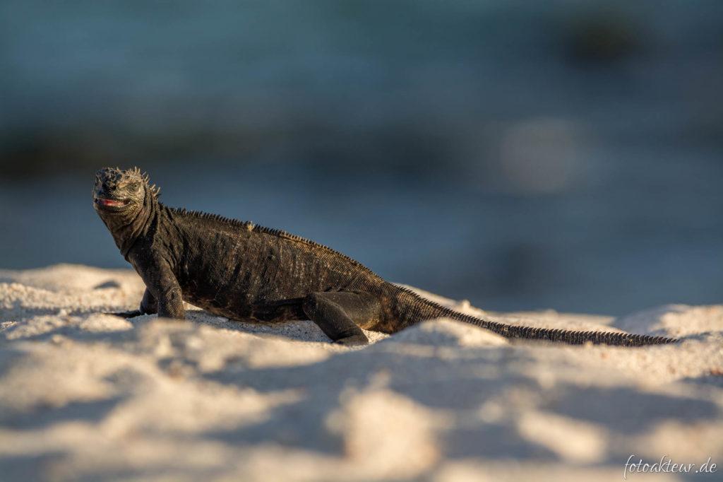 170603_Galapagos_Teil4_00015