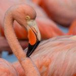 170604_Galapagos_Teil4_Titel_00024