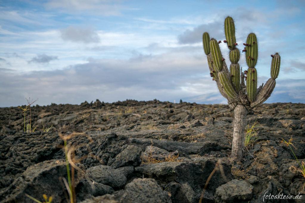 170605_Galapagos_Teil5_00001