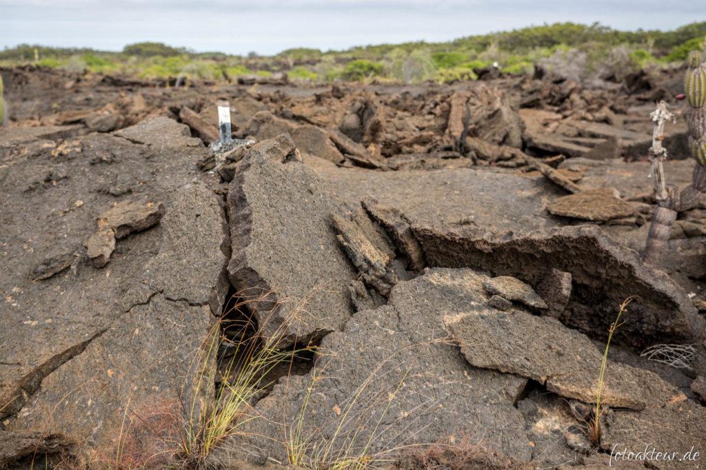 170605_Galapagos_Teil5_00004