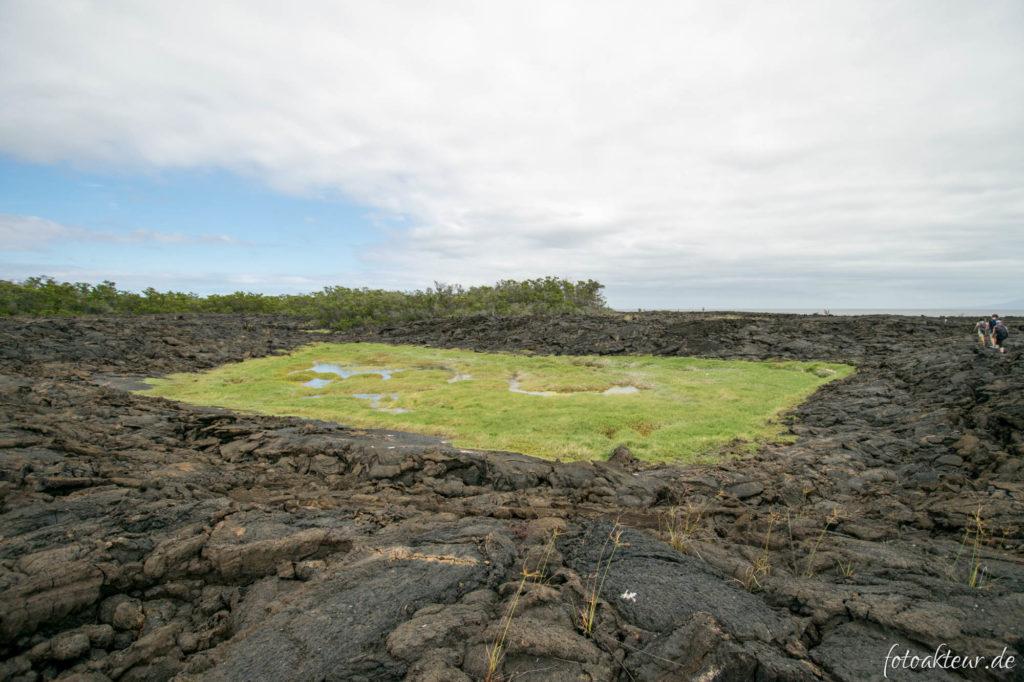170605_Galapagos_Teil5_00006