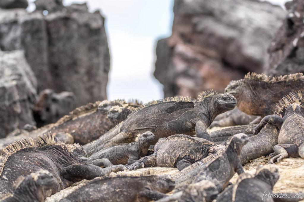 170605_Galapagos_Teil5_00008