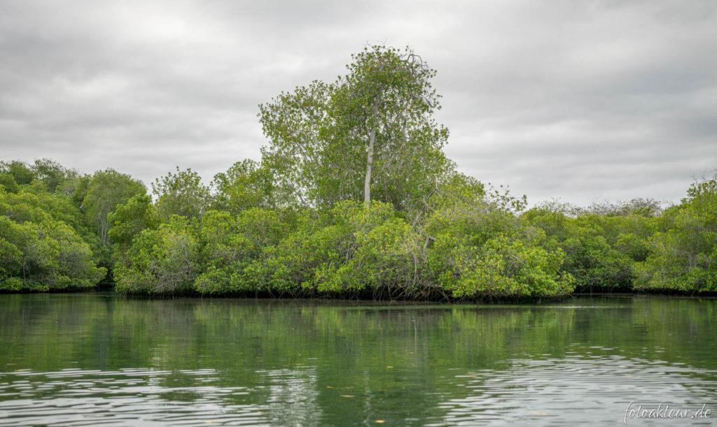 Mangrovenküste