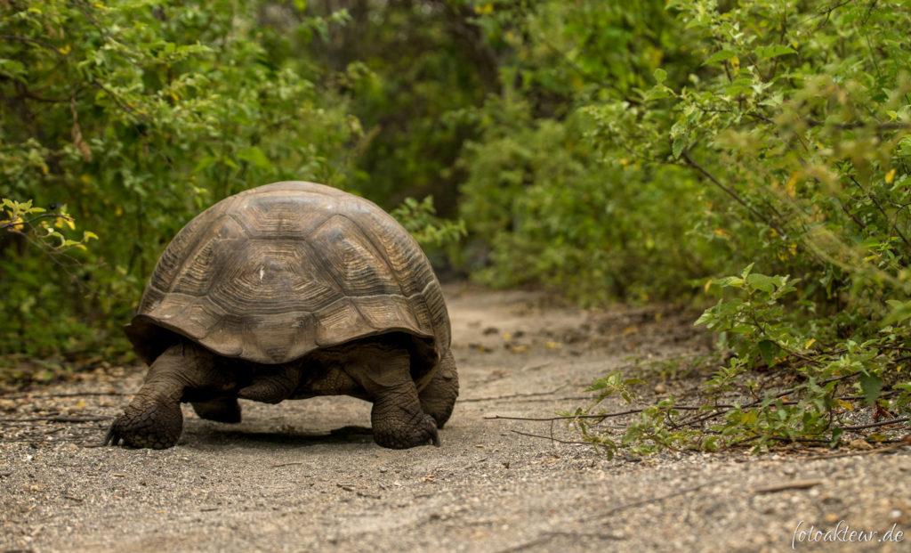 170606_Galapagos_Teil5_00020