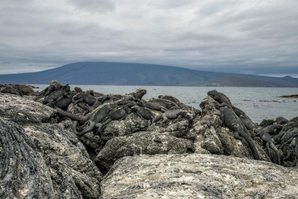 170606_Galapagos_Teil5_00023