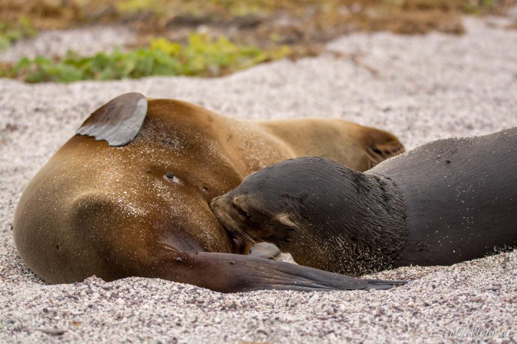 170606_Galapagos_Teil5_00025