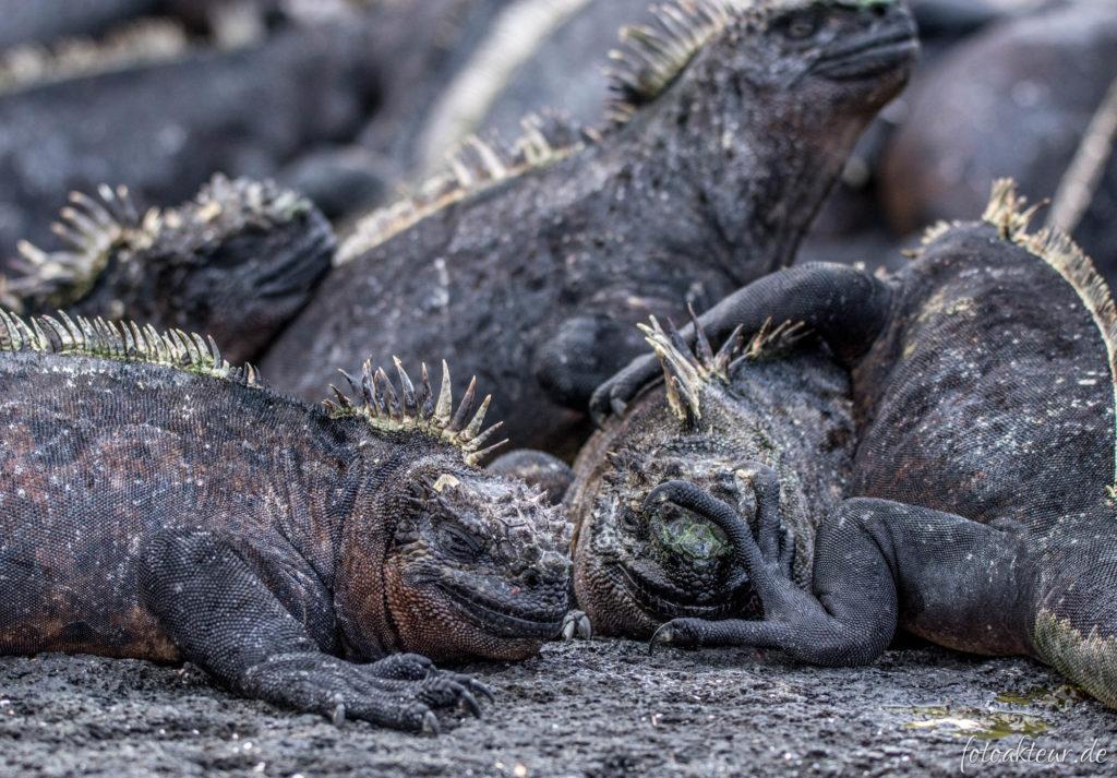 170606_Galapagos_Teil5_00026