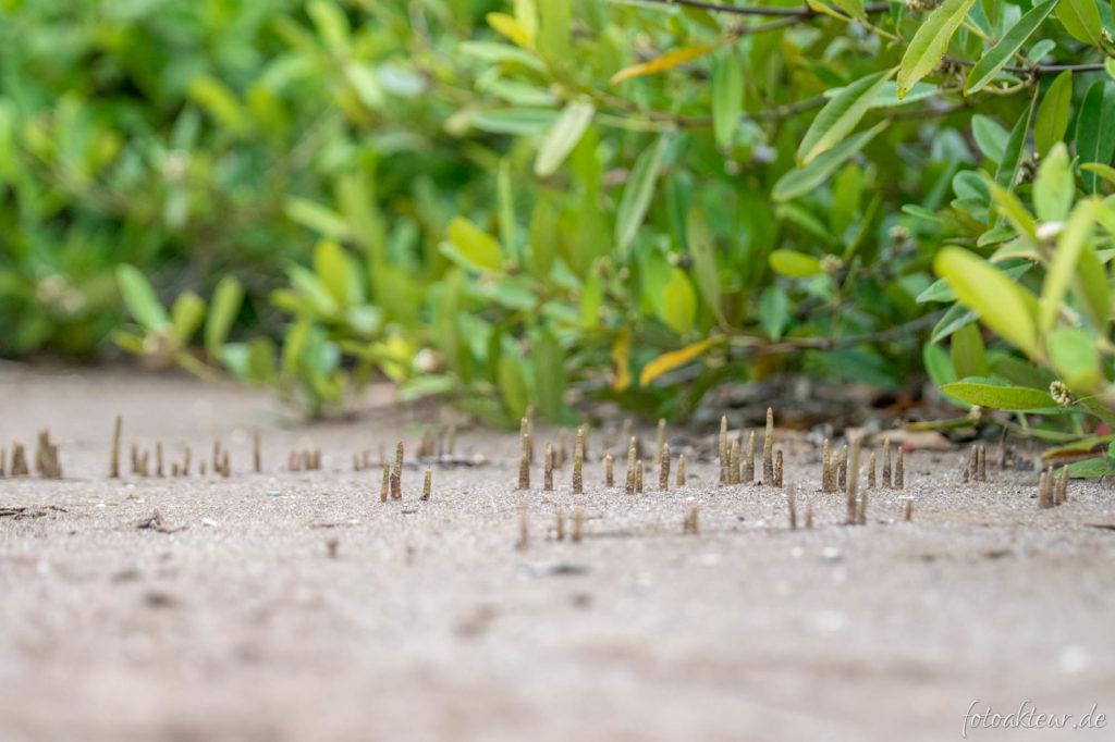 Neue Mangroven