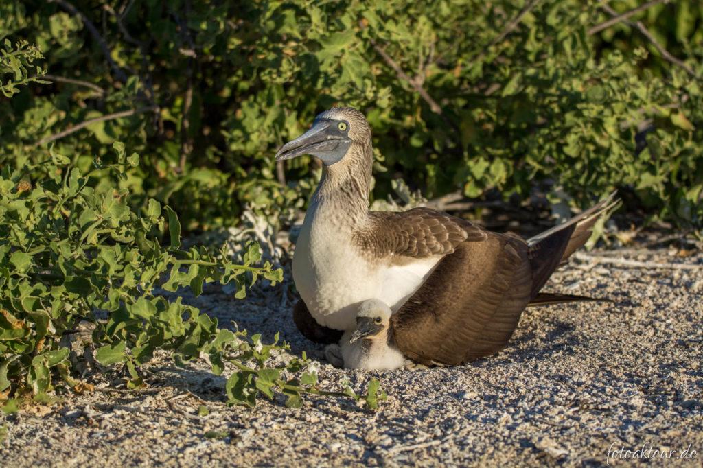 170609_Galapagos_Teil6_00026